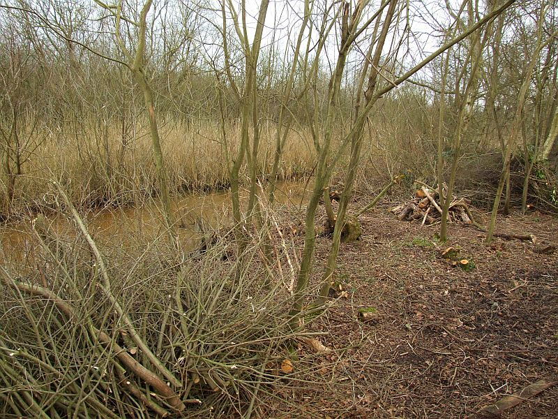 Behind The Reed Bed