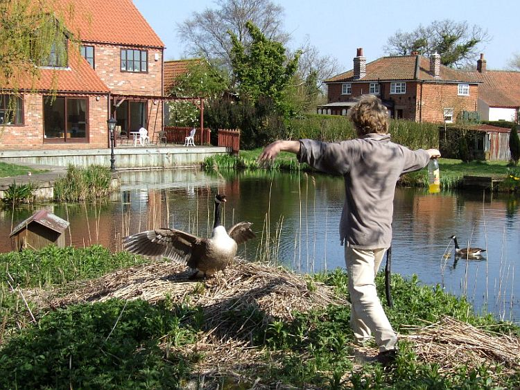 Scaring the Goose Away