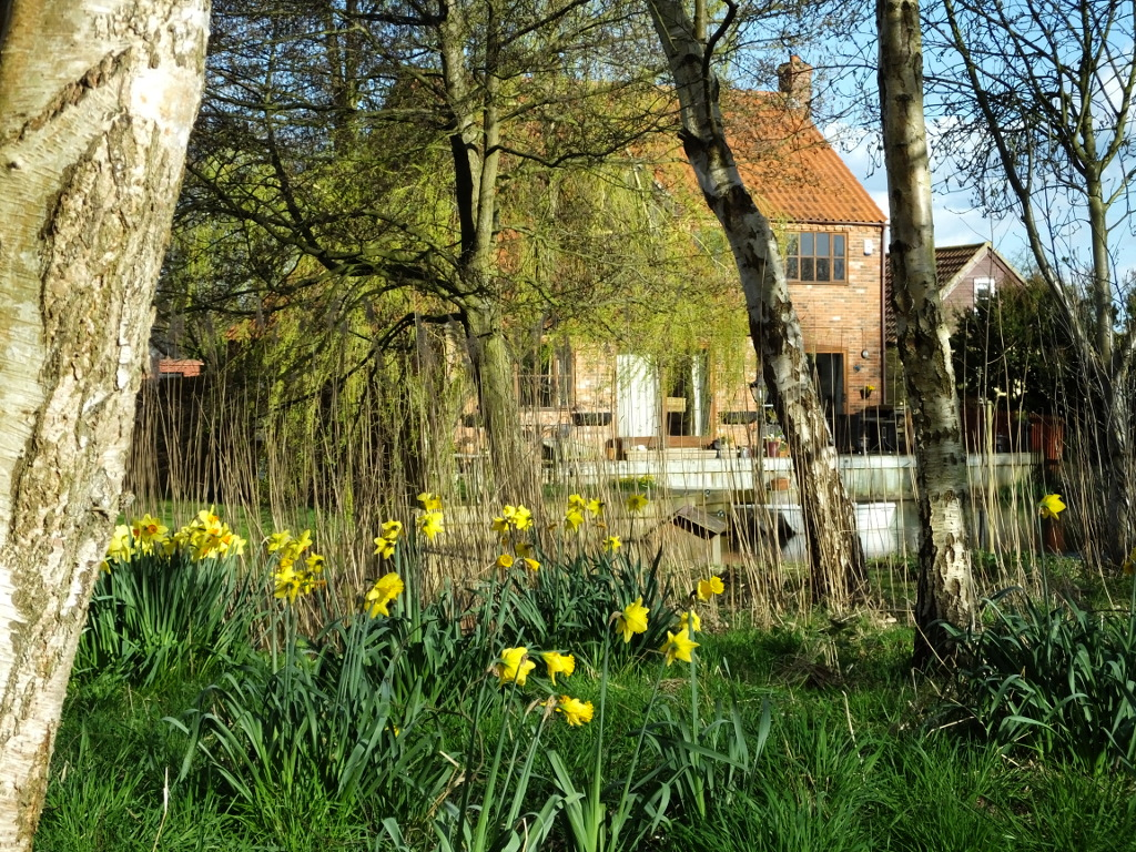 Daffodils and the House