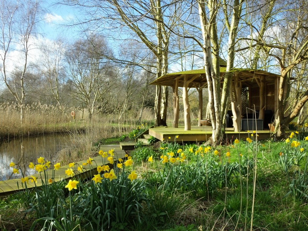Daffodils and Tree House