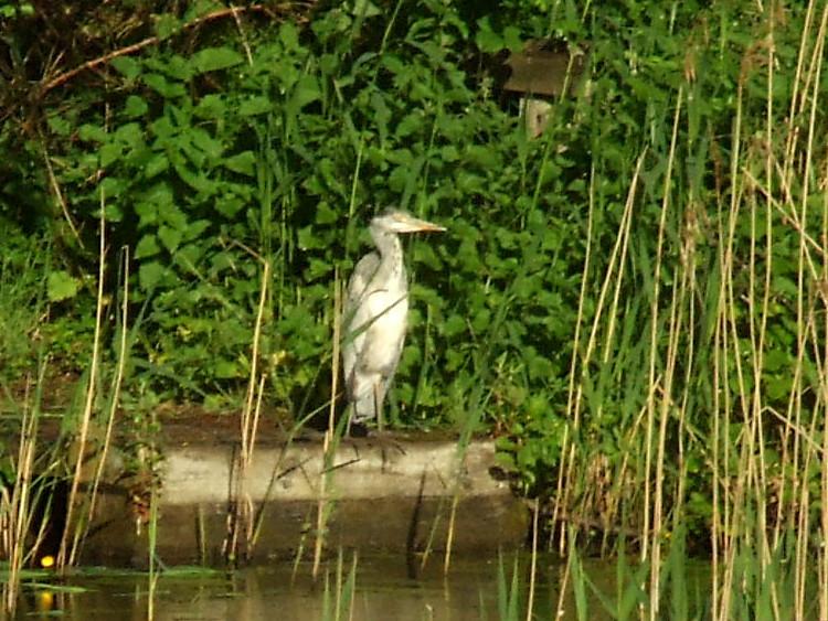 Heron on Fishing Stand
