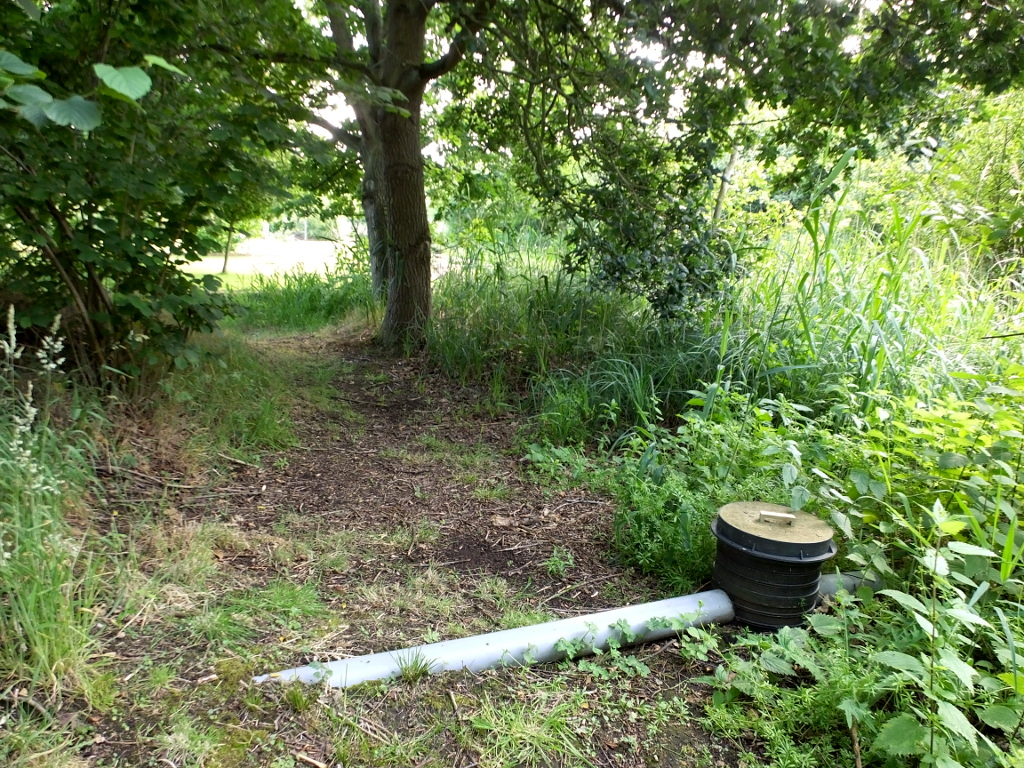 Reedbed Outfall Pipe