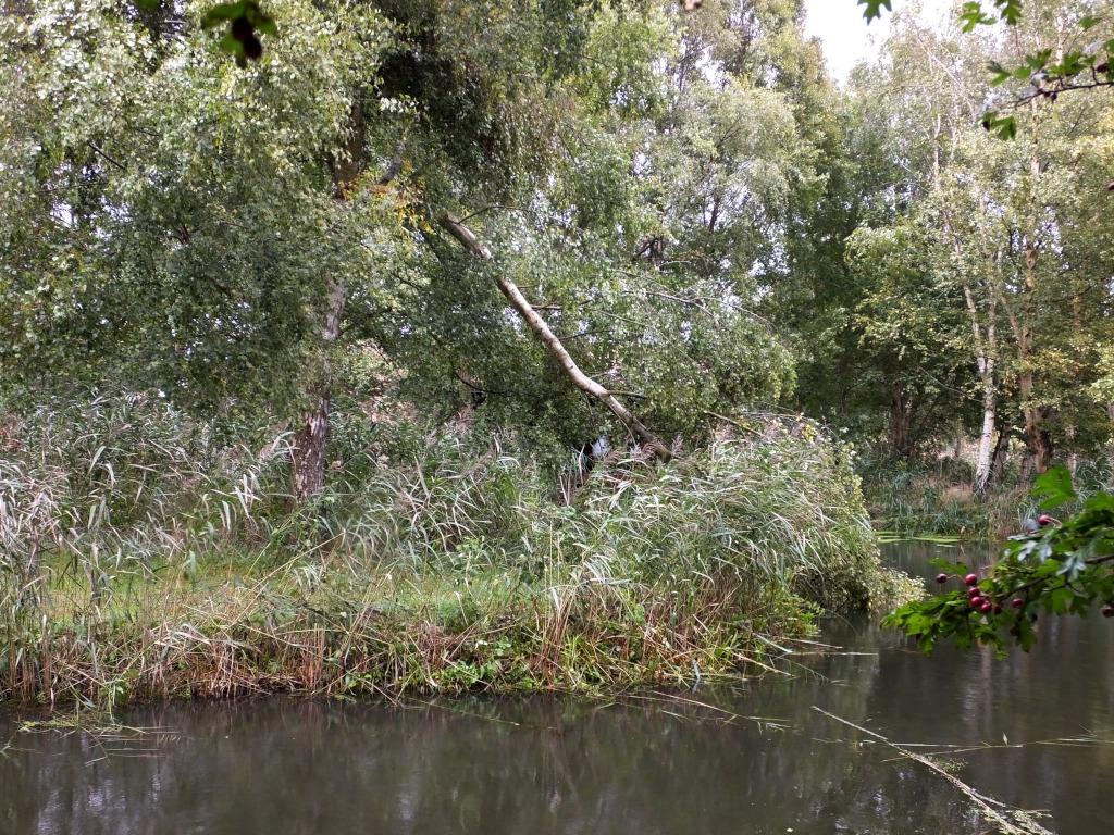 Birch Down