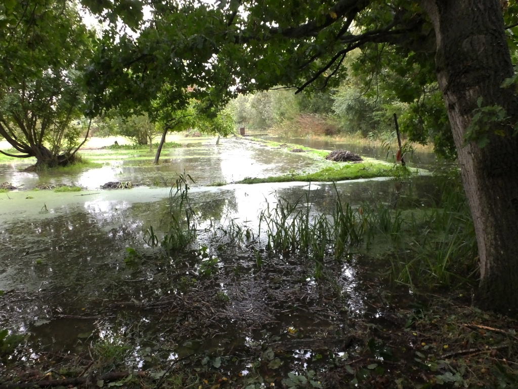 Peter's Ground Flooded
